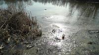 В пруду поселка Октябрьский в Туле из-за загрязнения гибнет рыба, Фото: 8
