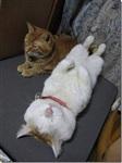 Самый ленивый кот, Фото: 6