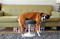 Кошки и собаки, проигравшие битву с мебелью, Фото: 25