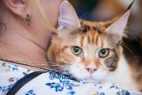 """Выставка """"Пряничные кошки"""". 15-16 августа 2015 года., Фото: 19"""