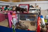 Выставка кошек в ГКЗ. 26 марта 2016 года, Фото: 76