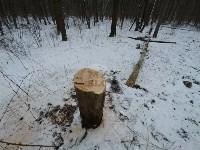 В Тульском лесу нашли загадочную поляну с крестами, елкой и зеркалами, Фото: 10
