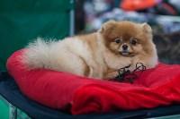 Выставка собак в Туле, Фото: 52