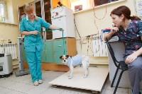 В какой ветеринарной клинике  лечить своего питомца, Фото: 4