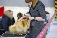 Выставка собак в Туле 14.04.19, Фото: 23