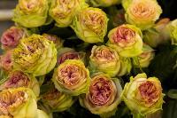 Миллион разных роз: как устроена цветочная теплица, Фото: 13