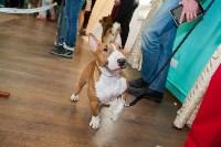 Выставка собак в Туле, 29.11.2015, Фото: 112