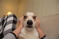 Собака-актриса, Фото: 3