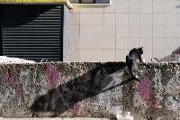 Тульские котики, Фото: 77