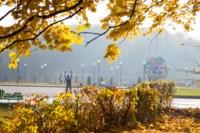 Центральный парк, утро, осень, Фото: 28