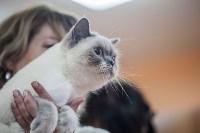В Туле прошла выставка «Пряничные кошки» , Фото: 101