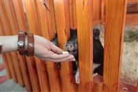 трогательный зоопарк, Фото: 24