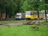 Упавшее дерево в Криволучье, Фото: 3