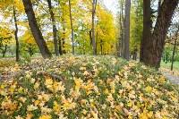 Золотая осень в Туле-2019, Фото: 18