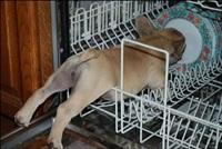 Кошки и собаки, проигравшие битву с мебелью, Фото: 22