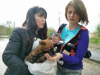 Туляки спасли погибавших в битуме щенков, Фото: 22