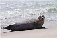 Жизнь тюленя: мечта!, Фото: 11