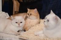 Выставка кошек в Искре, Фото: 11