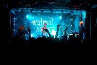 Animal ДжаZ, Фото: 25