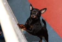 Выставка собак DogLand, Фото: 7