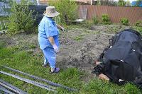 Бродячие собаки погубили рассаду тулячки и довели ее до сердечного приступа, Фото: 1