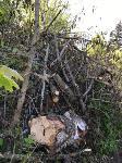 В Черни во время уборки на кладбище могилы завалили спиленными деревьями, Фото: 1