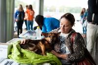 Благотворительный фестиваль помощи животным, Фото: 12