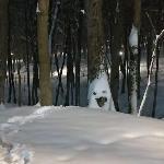 Туляки слепили креативных снеговиков: фото, Фото: 4