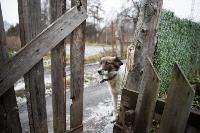 Дворняги, дворяне, двор-терьеры: 50 фото самых потрясающих уличных собак, Фото: 20