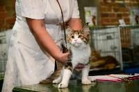 Выставка кошек в Искре, Фото: 41