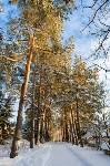 Снежное Поленово, Фото: 18