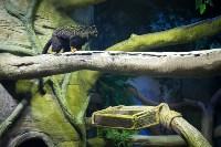 Тульский экзотариум: животные, Фото: 34