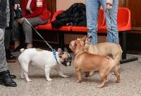 """Выставки собак в ДК """"Косогорец"""", Фото: 60"""
