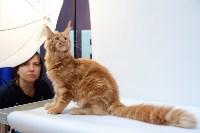 """Выставка """"Пряничные кошки"""" в ТРЦ """"Макси"""", Фото: 52"""