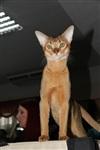 В Туле прошла международная выставка кошек, Фото: 35