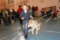 В Туле прошла всероссийская выставка собак, Фото: 56