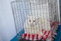В Туле прошла выставка «Пряничные кошки» , Фото: 69