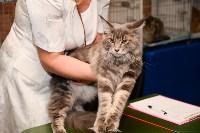 Выставка кошек в Искре, Фото: 50