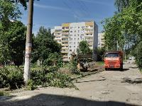 вырубка деревьев во дворе дома №33 по ул. Горького в Туле, Фото: 12