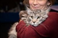 Выставка кошек в Искре, Фото: 71