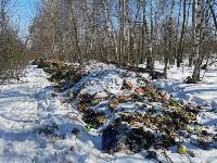Под Тулой неизвестные сбросили в лесополосе несколько тонн гнилых овощей, Фото: 8