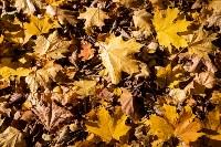 Золотая осень в Туле-2019, Фото: 69