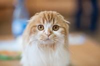 В Туле прошла выставка «Пряничные кошки» , Фото: 2