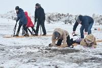 Праздник северных собак на Куликовом поле , Фото: 114