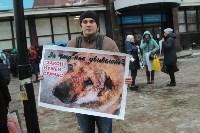 Более 8000 туляков требуют запретить убийство бездомных животных, Фото: 28
