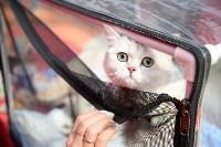 """Выставка """"Пряничные кошки"""" в ТРЦ """"Макси"""", Фото: 21"""