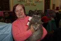 Выставка кошек. 21.12.2014, Фото: 15