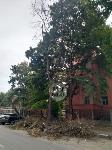 Читатель о вырубке деревьев на ул. Революции: «Была красивая зеленая улица, а теперь…», Фото: 2