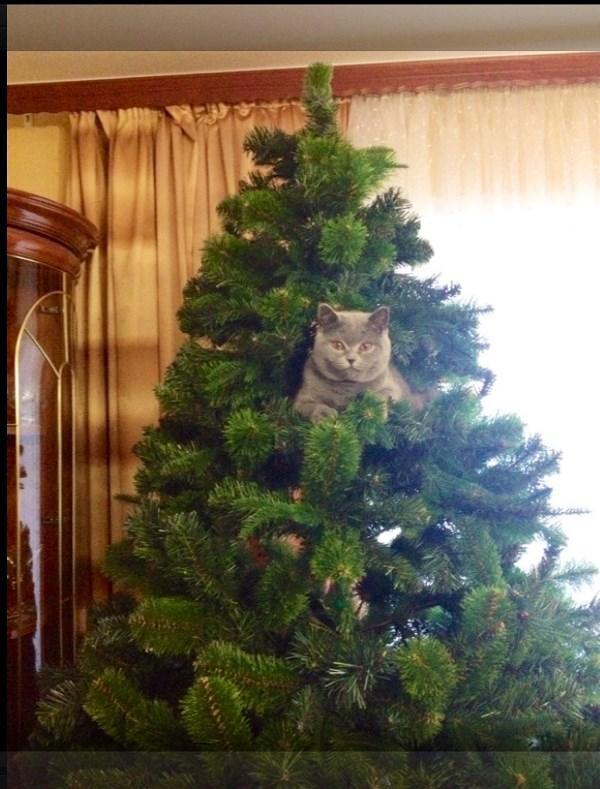 Подруги кот,,,,, наблюдает,,,,,,!!!!! В ожидании нового года!!!!!!