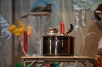 Театр кошек в ГКЗ, Фото: 59